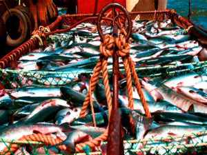 Россия обнуляет с 1 сентября пошлину на рыбную продукцию