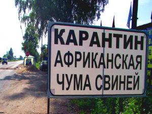 Свинину из Чувашии запретили ввозить в Беларусь